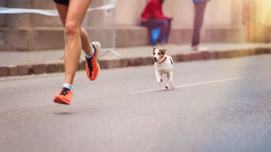 Hund beim Marathon