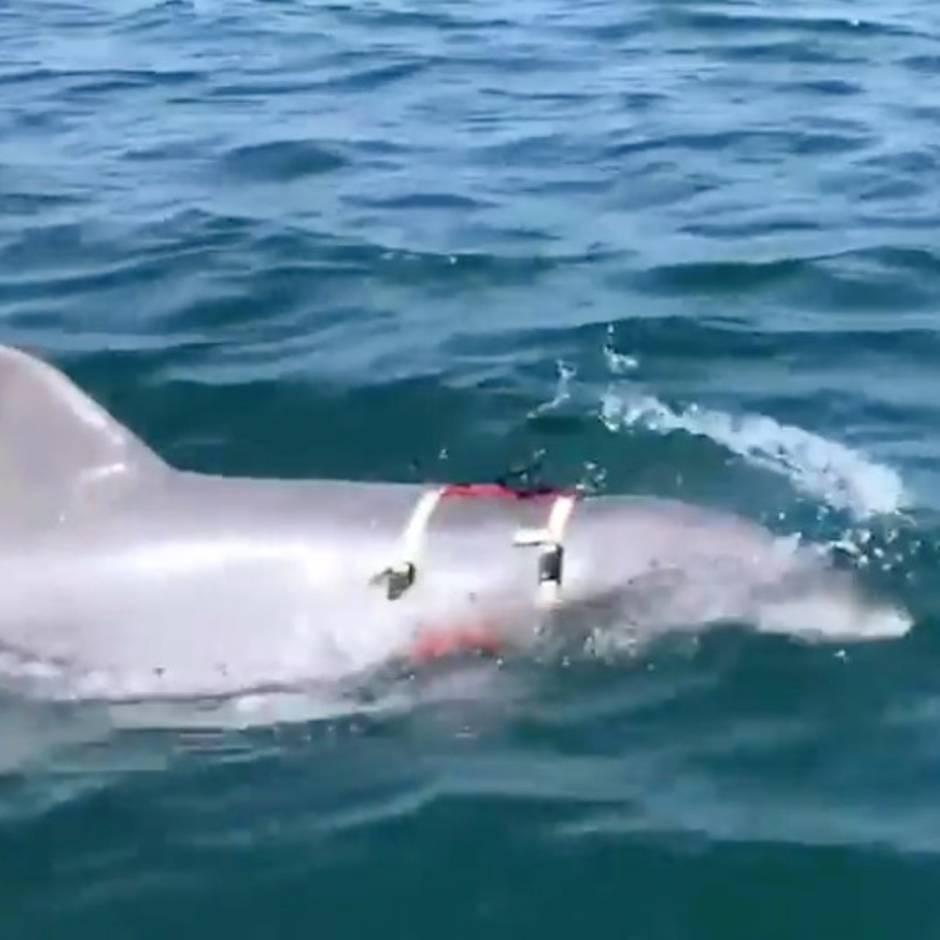 Delfin-Sex-Videos