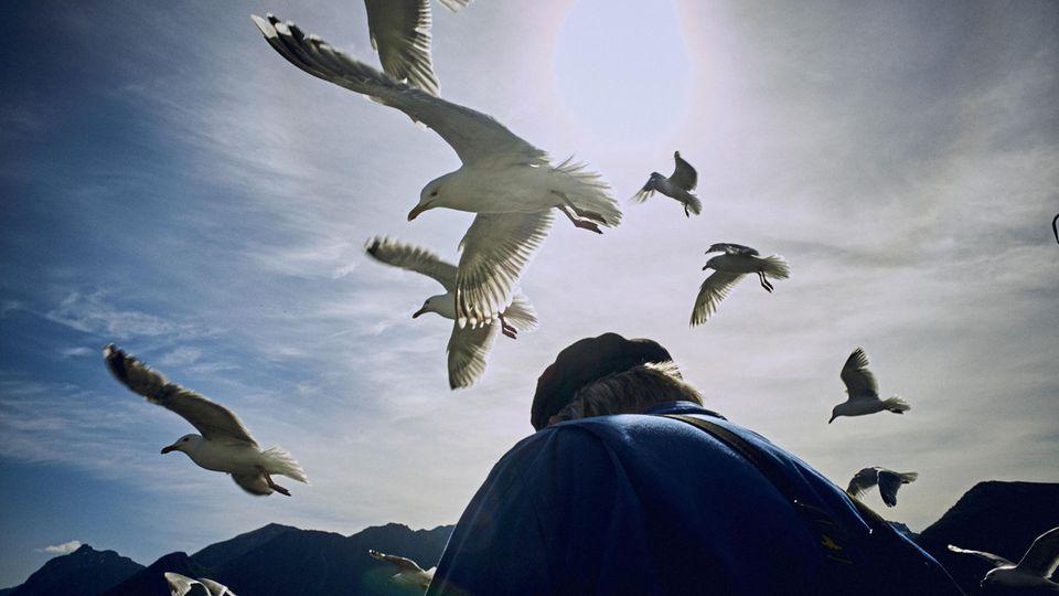 Möwen lauern auf leichte Beute, während ein Fischer seinen Fang ausnimmt. Seit Ewigkeiten sichert die Natur den Menschen auf den Lofoten die Existenz