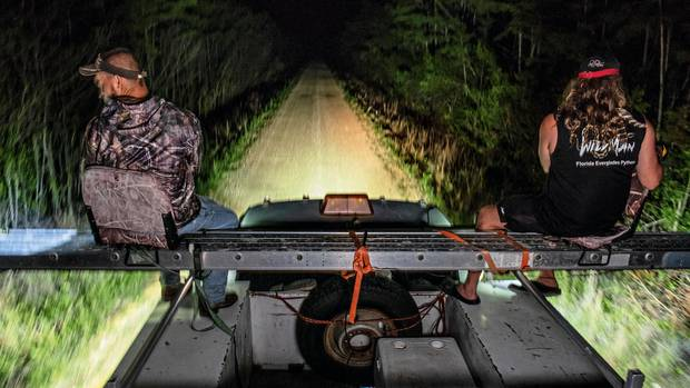 Schlangensuche ist Nachtarbeit. Die Männer befahren einen schmalen Damm, eine Art Hochsitz ist auf die Ladefläche des Pick-ups montiert