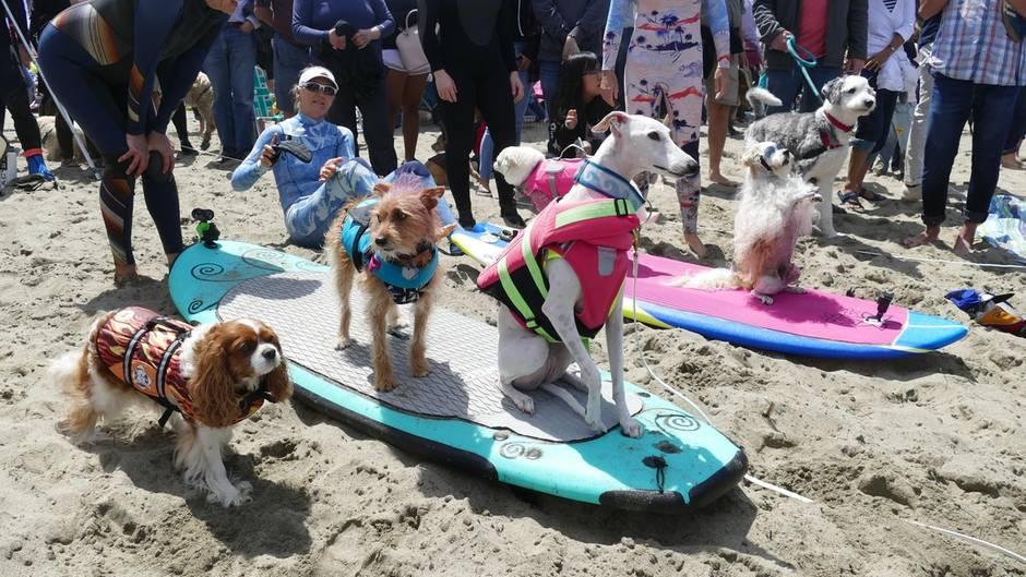 World Dog Surfing Champion Ships