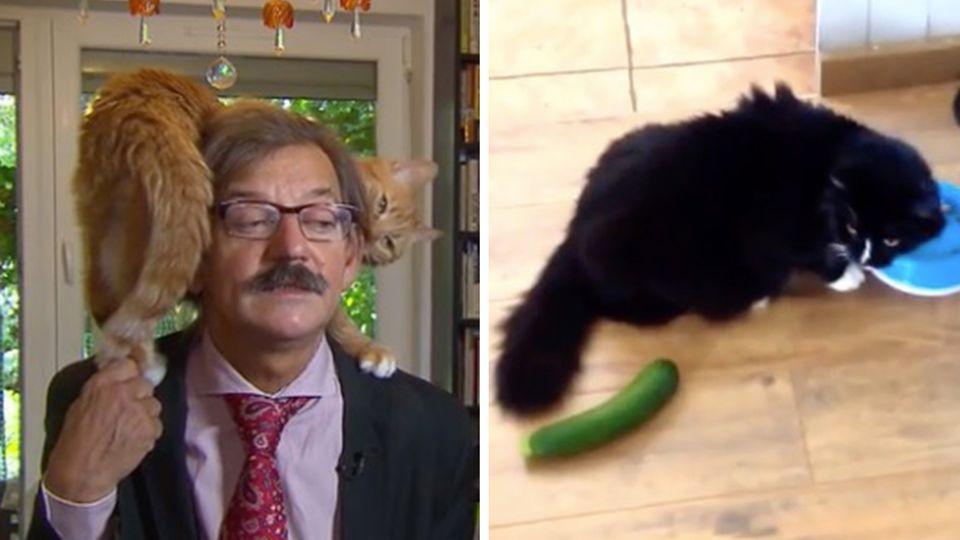 Best-of Cat-Content: Zum Weltkatzentag geben wir euch die besten Katzenvideos überhaupt