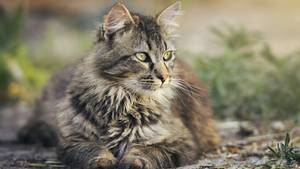 Katzen besitzen andere Instinkte als Menschen.