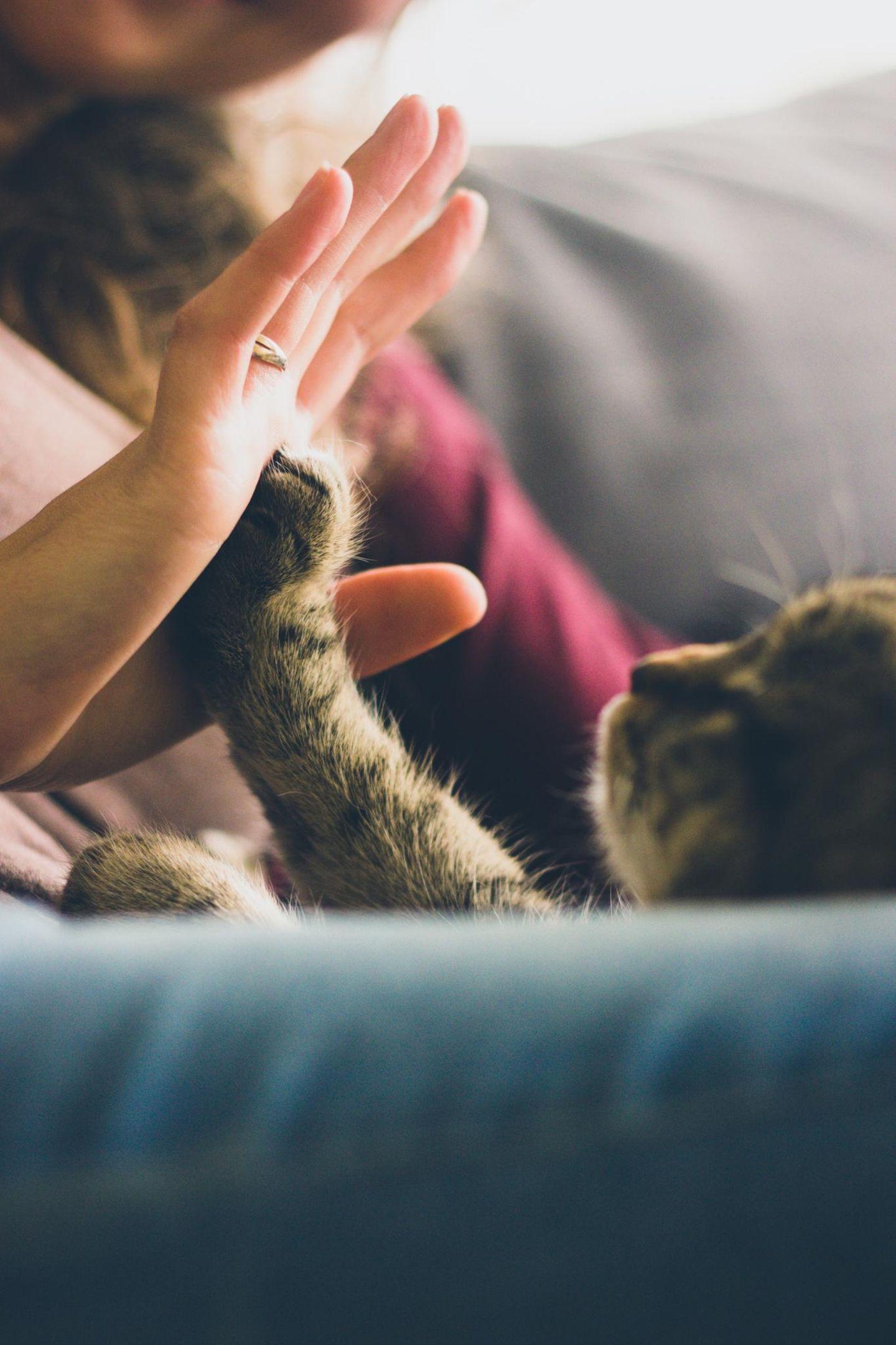 Weltkatzentag 1