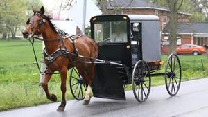 Amish Uber Buggy