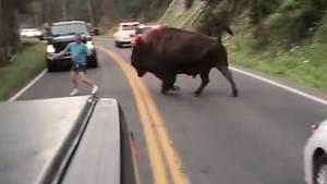 Ein Mann legt sich mit einem Bison an