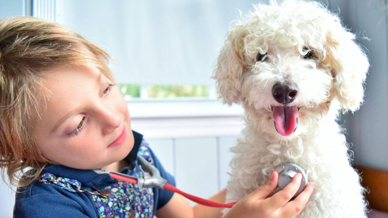 Ein Junge horcht mit Stethoskop einen Hund ab