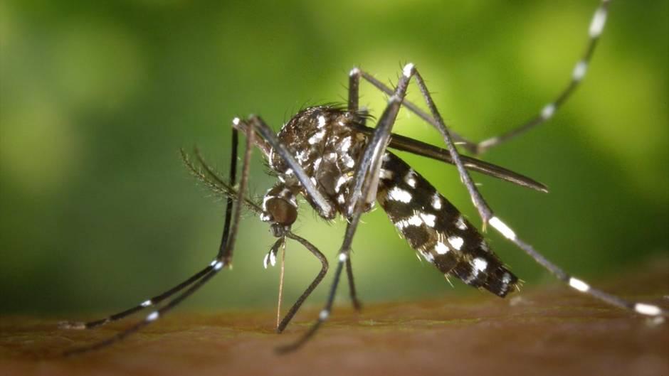 Sommerplage: So schützen Sie sich erfolgreich vor Mückenstichen