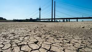 Nordrhein-Westfalen, Düsseldorf: Die Erde im Flussbett des Rheins ist aufgrund der Dürre ausgetrocknet und aufgerissen.