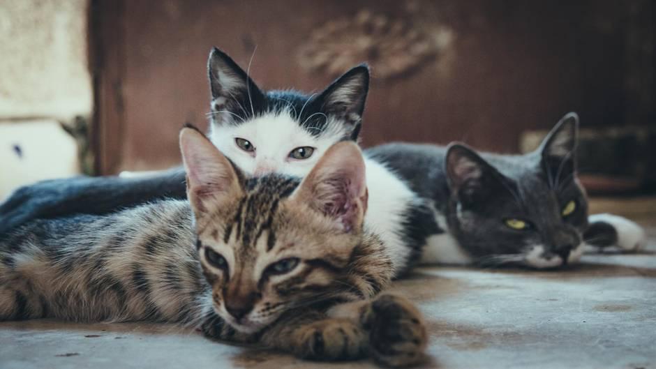 Katzensitter gesucht