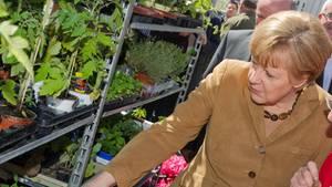 Angela Merkel kauft am 16.05.2014 auf dem Marktplatz in Greifswald bei einer Blumenhändlerin ein