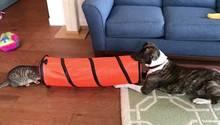Hund Jessie versucht Katze River zu verarschen.