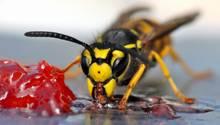 Eine Wespe frisst Marmelade