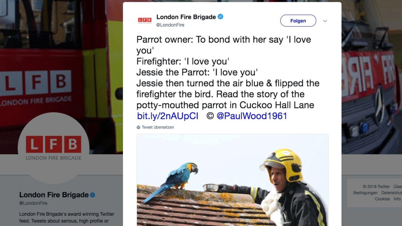 Ein Papagei auf einem Dachgiebel, daneben ein Feuerwehrmann auf einer Leiter