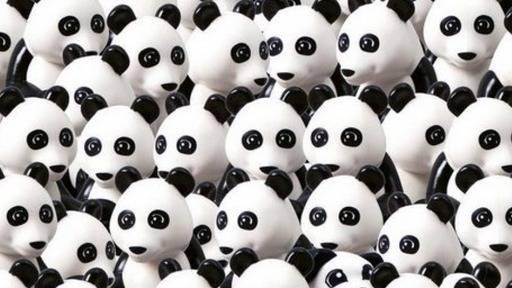 Suchbild: In diesem Rudel Pandabären versteckt sich ein Hund - wie schnell finden Sie ihn?