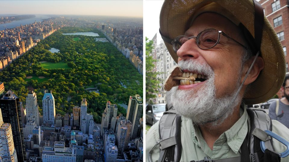 Steve Brill, der in New Yorker Parks Pflanzen und ihre Verwendung beim Kochen erklärt, hält einen Dachpilz zwischen den Zähnen, den er an einem Baumstumpf am Central Park (links) entdeckt hat.