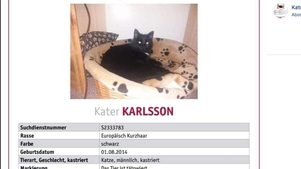 Suchplakat für Kater Karlsson