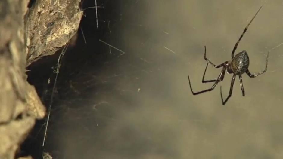 Arachnophobie: Wer Angst vor Spinnen hat, sollte Kleidung in dieser Farbe besser nicht tragen