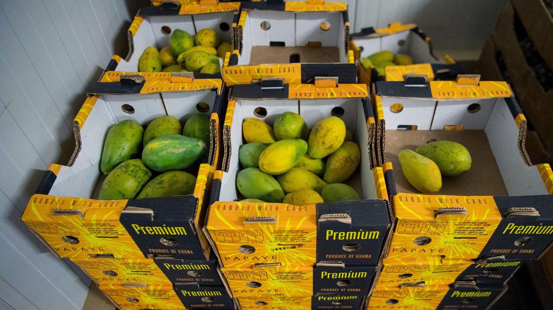 Papaya liegen in einer Bertriebshalle der Schuhmacher GmbH