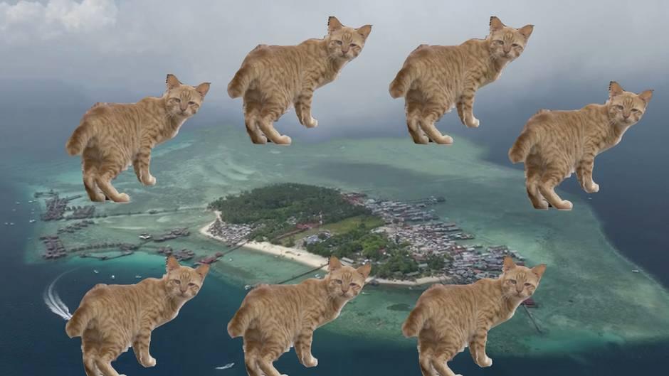 Invasion der Vierbeiner: Auf dieser kleinen Insel leben 1500 herrenlose Katzen - und das ist ein riesiges Problem