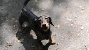 nachrichten deutschland - erhängter hund berlin