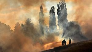 Feuerwehrleute löschen bei Rostock ein Getreidefeld