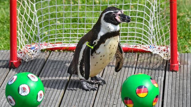 Nachrichten aus Deutschland: Tote Pinguine in Lübbenau