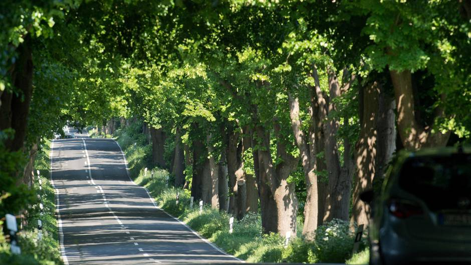Die Deutsche Alleenstrasse führt über fast 3000km auf den schönsten Alleen Deutschlands von Rügen bis zum Bodensee.