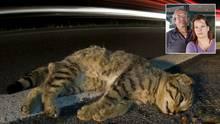 Sie jagen den Katzenmörder: Tony Jenkins und Boudicca Rising