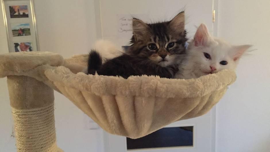 Die zwei Katzen der Autorin