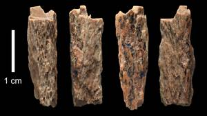 Diese Knochen beweisen, dass die Neandertaler sich mit den Denisovanern paarten