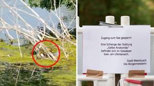 Links liegt eine Schlange auf Ästen, die aus dem Wasser ragen, rechts ist eine Absperrung mit Warnung vor einer gelben Anakonda