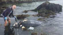 Cornwall: Brite findet mysteriösen Kadaver im Meer