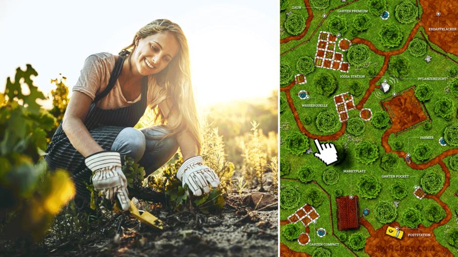"""Neuer Trend """"Online-Gärtnern"""": Links eine Frau jätet Unkraut, rechts ein Screenshot von myAcker.com"""