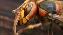 Diese Pflanzen Halten Mücken Und Andere Nervige Insekten Fern Sternde