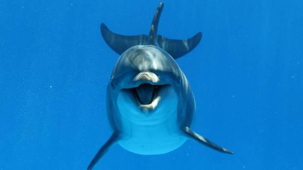 Delfine gelten als neugierig und freundlich - aber wehe, wenn sie sexuell nicht ausgelastet sind (Symbolbild)