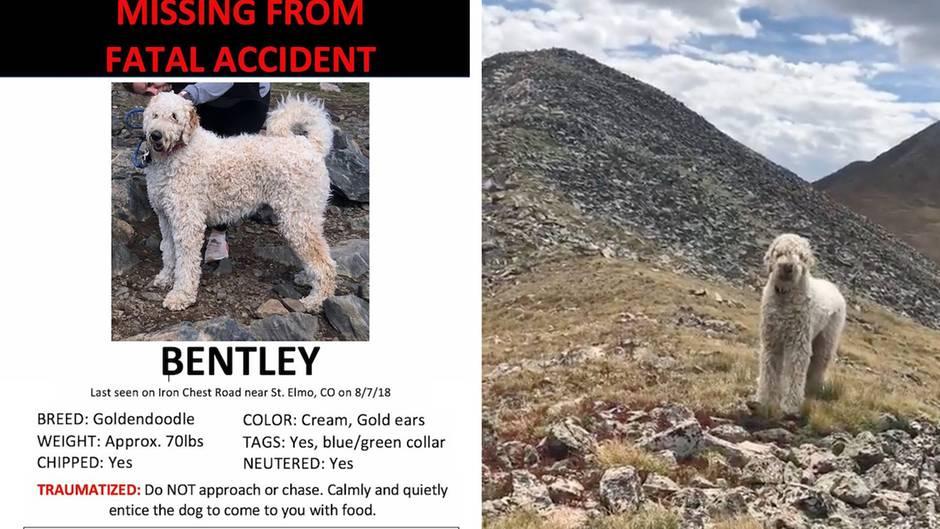 Rührendes Wiedersehen: Hund wird nach tödlichem Unfall 19 Tage lang vermisst – dann geschieht ein kleines Wunder