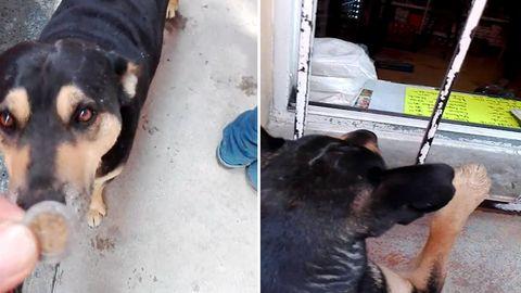 Hund kauft Wurst am Verkaufsfenster