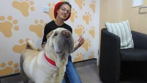 Hund verschlingt sehr langen Kebab-Spieß und überlebt