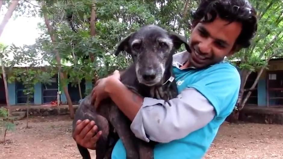 Indien: Mühsam wieder aufgepäppelt: Hund ist nach Rettung kaum wiederzuerkennen