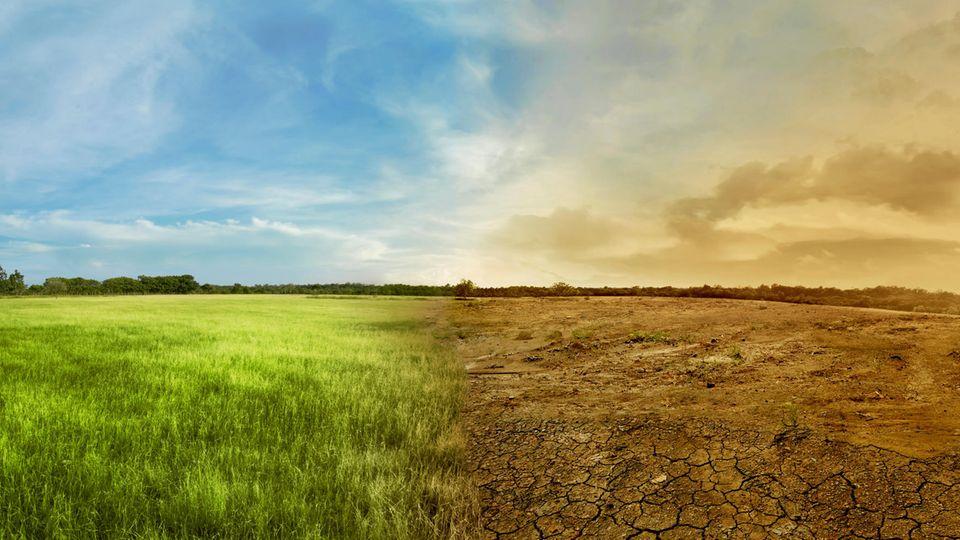 Gegenüberstellung von grüner Wiese und einer verdorrten Wiese