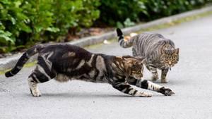 Katzen Neuseeland