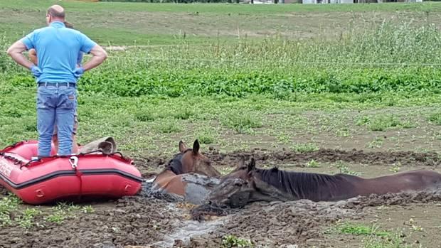 Pferde Morast