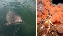 Lebensraum Ostsee: Schweinswale fühlen sich hier wohl, ebenso wie orange leuchtende Seenelken