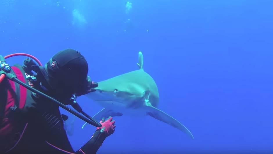 Taucherin entfernt Haken vom Hai