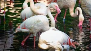Flamingo Ingo ist das älteste Tier im Berliner Zoo
