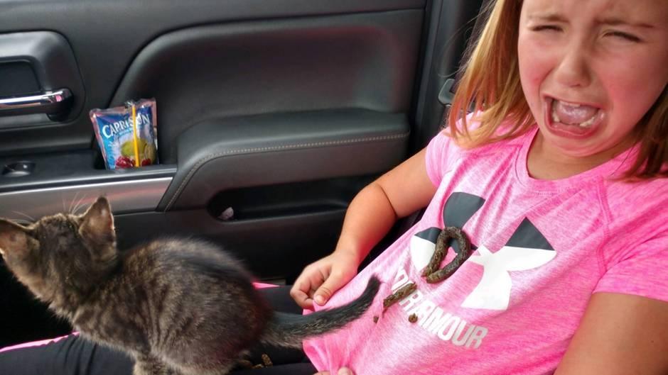 """""""Shit happens"""": Katzen-Mama zu sein, hat sich dieses Mädchen wohl anders vorgestellt"""