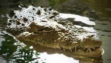 Das Krokodil zog Mutter und Kind unter Wasser – Die Dorfbewohner kamen zu spät