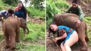 Liebestoller Baby-Elefant versetzt Touristin in Verzückung