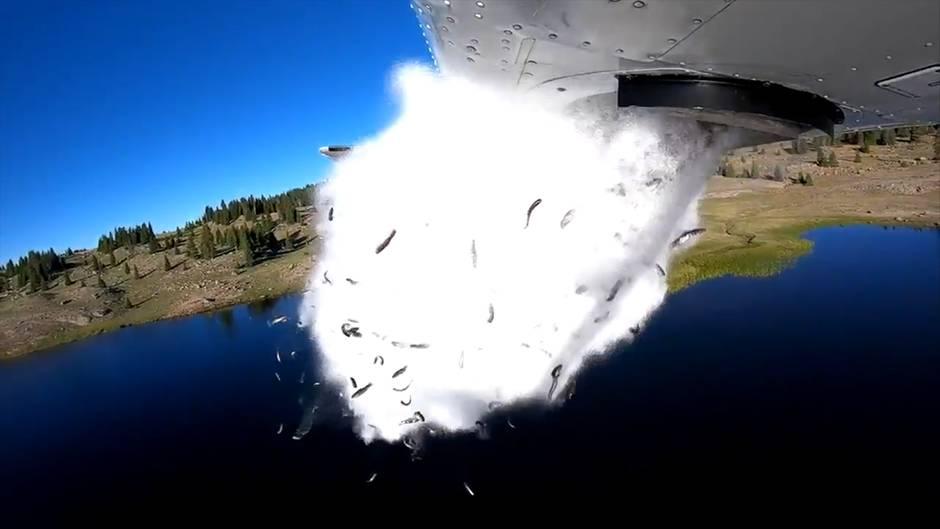 Spektakuläre Aufnahmen: Hier regnet es Fische vom Himmel - der Grund macht fassungslos